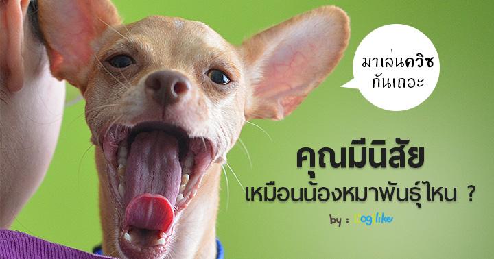 Dogilike.com :: ควิซทายใจ :: ตอนนี้! น้องหมาอยากบอกอะไรกับคุณ