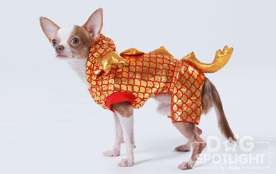 นัองหมา, สุนัข, Dog Spotlight, ถูกทิ้ง, วีรกรรมสุดแสบ, น้องหมาพันทาง, ซุป'ตาร์, แจ้งเกิด,ทองเอก, แบรี่