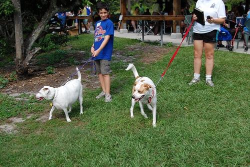 Dogilike.com :: 5 ส ที่คนเลี้ยงน้องหมาต้องรู้ !!