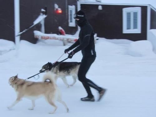 Dogilike.com :: หนุ่มทนหนาวลุยหิมะทุกวันเพื่อจูงสุนัขในศูนย์พักพิงฯ ออกไปเดินเล่น !