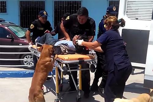 Dogilike.com :: 2 สุนัขกระโดดขึ้นรถพยาบาล นั่งเฝ้าเจ้าของบาดเจ็บหน้าห้องฉุกเฉินไม่ห่าง !!
