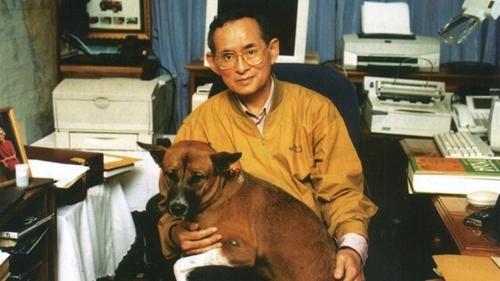 Dogilike.com :: เรื่องเล่าจากสัตวแพทย์ครั้ง ในหลวง ร.9 ทรงอุ้มคุณทองแดงเข้ารับการรักษา