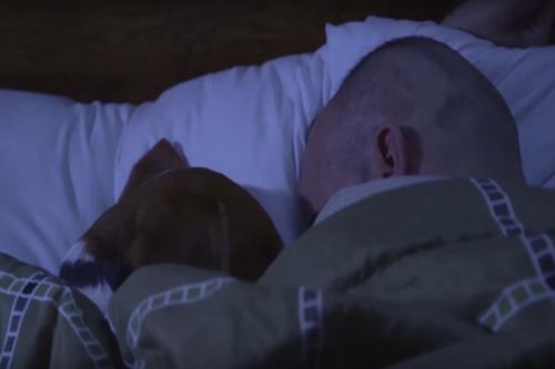 Dogilike.com :: Winston สุนัขบำบัดผู้คอยทำหน้าที่ปลุกทหารผ่านศึกให้ตื่นจากฝันร้าย !