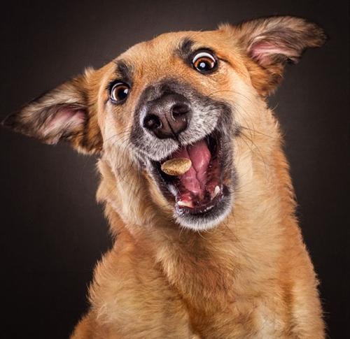 Dogilike.com :: เรื่องกินเรื่องใหญ่! รวมภาพใบหน้าน้องหมาเวลาได้กินขนมอร่อย