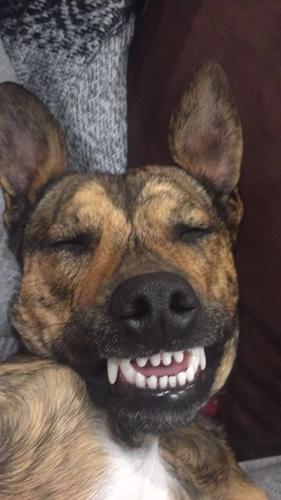 Dogilike.com :: น้องยิ้ม! เจ้า Reg น้องหมาหน้าทะเล้นที่ทำให้ใครต่อใครพากันหลงรัก