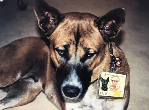 Dogilike.com :: ทุกคนทำได้! วิธีปันน้ำใจให้หมาจรฯ ตามรอยในหลวง ร.9