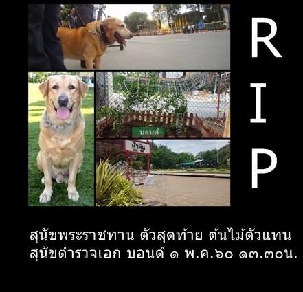 Dogilike.com :: ต้นไม้ตัวแทน สุนัขตำรวจเอก บอนด์ ระลึกถึงสุนัขพระราชทานตัวสุดท้าย !