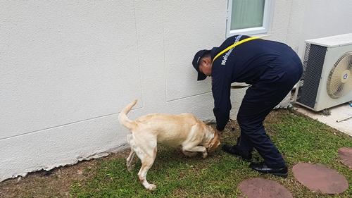 Dogilike.com :: เส้นทางสี่ขาผู้กล้า มว.สุนัขพระราชทาน สุนัขอารักขาของพระราชา
