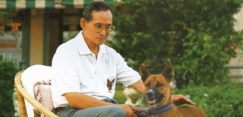 Dogilike.com :: รวมของที่ระลึก คุณทองแดง ที่ในหลวงรัชกาลที่ 9 พระราชทานให้แก่ประชาชน