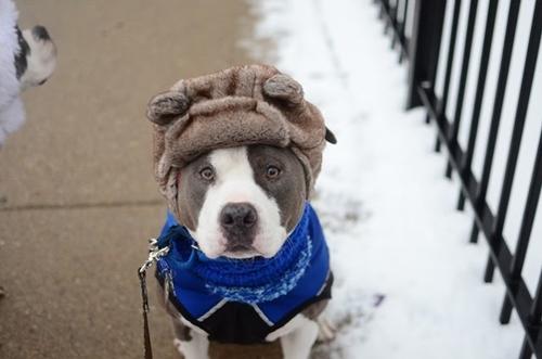 Dogilike.com :: หนาวนี้มาดูแลให้น้องหมาร่างกายแข็งแรงด้วยวิธีง่าย ๆ กันเถอะ