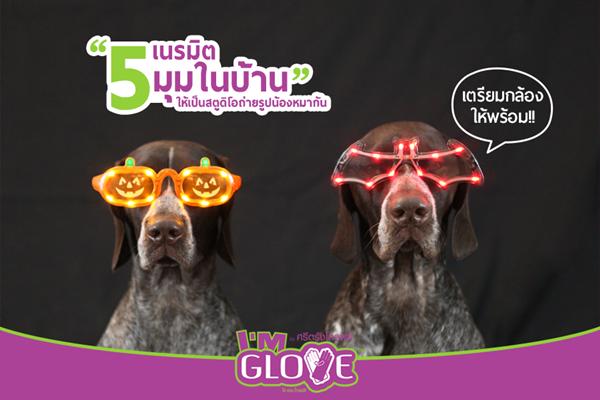 Dogilike.com :: เตรียมกล้องให้พร้อม !! เนรมิต 5 มุมในบ้านให้เป็นสตูดิโอถ่ายรูปน้องหมากัน