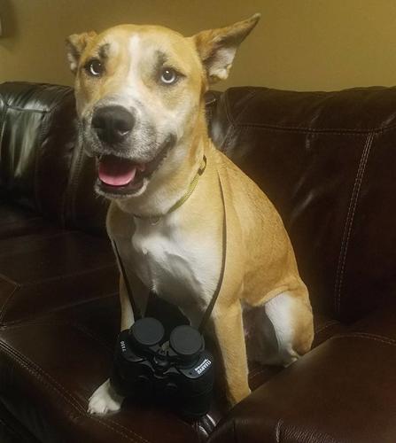 Dogilike.com :: ยามฝั่งสหรัฐฯ เข้าช่วยชีวิตสุนัขสูงวัยติดอยู่กลางทะเลสาบ