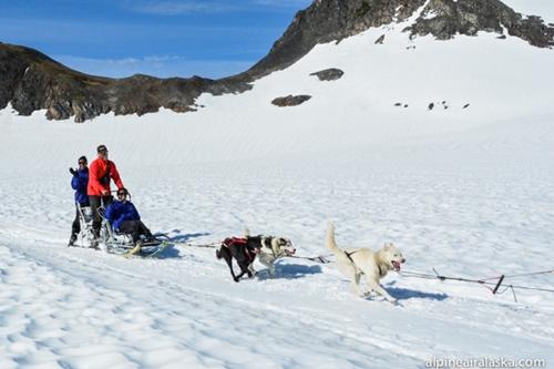 Dogilike.com :: วงการแข่งขันสุนัขลากเลื่อนอื้อฉาว หลังตรวจพบใช้ยาแก้ปวดในสุนัข !