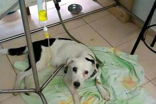 Dogilike.com :: เศร้า! เจ้าตูบตรอมใจตายหลังเฝ้ารอเจ้าของที่ทิ้งมันไว้ที่สนามบิน