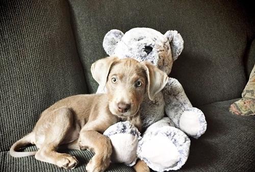 Dogilike.com :: เรื่องราว เจ้า Tink สุนัขป่วยที่ต้องนั่งกินอาหารด้วยเก้าอี้พิเศษ !