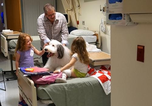 Dogilike.com :: Zammy สุนัขบำบัดตัวโตขวัญใจเด็ก ๆ ที่น่ารักที่สุดในโลก !