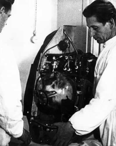 Dogilike.com :: รัสเซียจัดงานรำลึก 60 ปี ไลก้า สุนัขอวกาศตัวแรกของโลก !