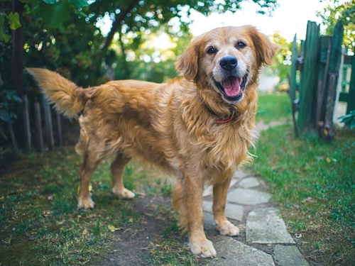 Dogilike.com :: แจกสูตร 5 วิธีที่ทำให้คุณและน้องหมาสุขภาพจิตดีตลอดทั้งปี