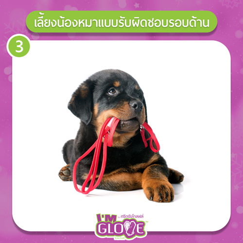 Dogilike.com :: 5 วิธีเสริมดวงให้ทั้งคุณและน้องหมาแฮปปี้รับปีใหม่