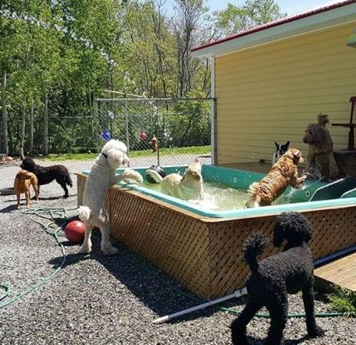 Dogilike.com :: บริการรถบัสรับ-ส่งพาหมาเที่ยวกำลังฮิตในแคนาดา ตอบโจทย์เจ้าของที่ไม่มีเวลา !