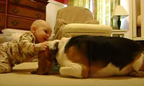 Dogilike.com :: ชวนยิ้ม! เผยนาทีสุดน่ารักเมื่อเจ้าตูบได้เจอหนูน้อยเป็นครั้งแรก (มีคลิป)