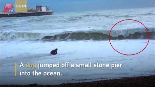 Dogilike.com :: นาทีระทึก! สาวเสี่ยงชีวิตฝ่าคลื่นดุ ช่วยสุนัขตกทะเล (มีคลิป)