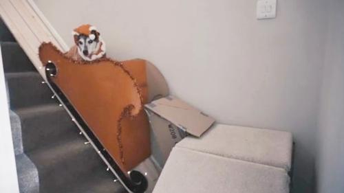 Dogilike.com :: ซึ้ง! หนุ่มเจ้าของสร้างลิฟท์เป็นของขวัญคริสต์มาสให้ตูบสูงวัย