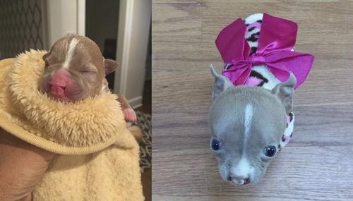 Dogilike.com :: เรื่องราว Sasha หมาน้อยปากแหว่งเพดานโหว่ผู้ไม่ยอมแพ้ต่อโชคชะตา
