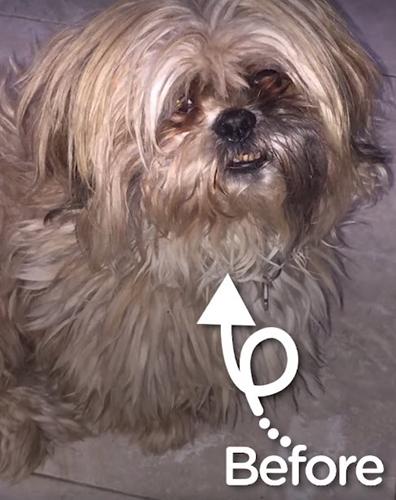 Dogilike.com :: เอ็นดู! คลิปหนูน้อยร้องลั่น หลังเจ้าตูบสุดรักโดนแปลงโฉมมาแบบนี้