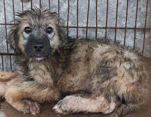 Dogilike.com :: ปลื้ม! หนุ่มมหาลัยฯ ทุ่มเทช่วยเหลือสุนัขกว่า 850 ตัว