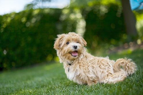 Dogilike.com :: จัดอันดับ พรปีใหม่ 5 ข้อที่เจ้าของอยากขอให้น้องหมา