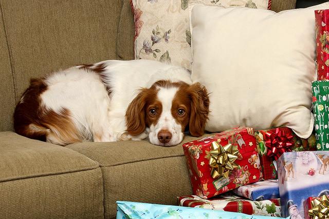 Dogilike.com :: เหตุผลที่ไม่ควรซื้อน้องหมาเป็นของขวัญให้แฟน!!!