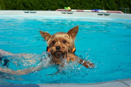 Dogilike.com :: 5 สิ่ง ถ้าไม่รักหมาจริงไม่มีทางทำให้แน่นอน !!