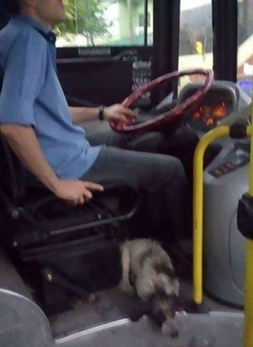 Dogilike.com :: หนุ่มขับรถบัสฝ่าพายุหิมะเจอ 2 ตูบจรจัดหนาวสั่น เปิดประตูให้เข้ามานั่งคลายหนาว !!