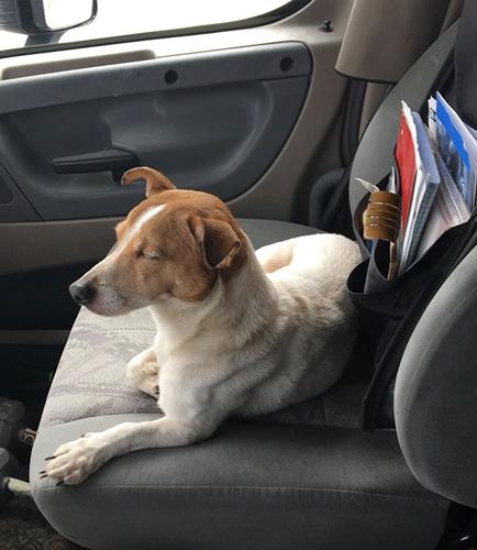 Dogilike.com :: เรื่องซึ้งๆ! ตูบถูกทิ้งข้างถนนเห่าเรียกให้คนช่วยชีวิตกระต่ายเพื่อนรัก