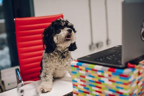 Dogilike.com :: เจ๋ง! บริษัทดังให้พนักงานลาพักร้อนฟรี 1 สัปดาห์ ถ้ารับเลี้ยงสุนัขตัวใหม่