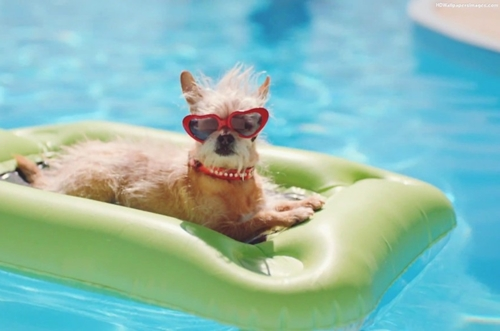 Dogilike.com :: 5 กิจกรรมง่าย ๆ ทำร่วมกับน้องหมาในหน้าร้อน