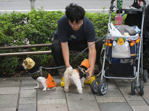 Dogilike.com :: 4 สถานการณ์ที่คุณอาจทำให้สุนัขเป็น Heat stroke แบบไม่รู้ตัว !