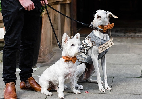 Dogilike.com :: จากสุนัขผอมหนังติดกระดูกกับวันนี้ที่เดินเคียงข้างหญิงสาวในวันแต่งงาน !