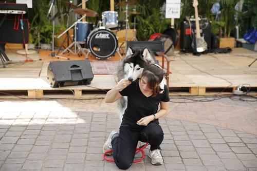 Dogilike.com :: สุขเต็มอิ่ม! ภาพบรรยากาศงานสำหรับคนรักน้องหมา The Circle Dog Yard