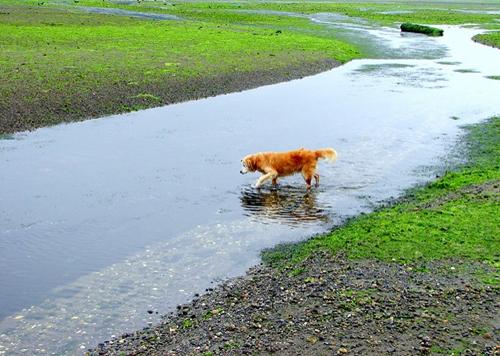 Dogilike.com :: Do Dont สิ่งที่ควรและไม่ควรทำสำหรับการดูแลน้องหมาในหน้าร้อนนี้