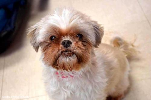 Dogilike.com :: น้องหมาสูงวัยตัวนี้เกือบถูกเจ้าของยิงทิ้งและฝังดินในป่า แต่โชคดีที่ จนท. มาช่วยเหลือทัน !!