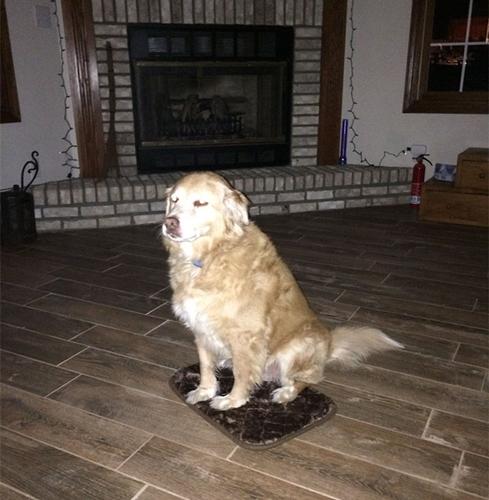 Dogilike.com :: สุดฮา เจ้าของสั่งซื้อเบาะนอนให้น้องหมาผิดไซส์ แต่เจ้าตูบก็รักษาน้ำใจทำให้เห็นว่าทุกอย่างปกติดี