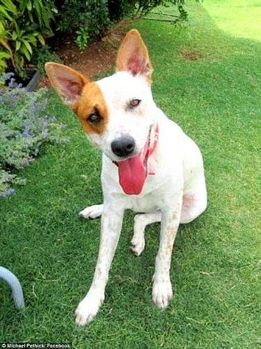 Dogilike.com :: หญิงรับสุนัขมาเลี้ยง 1 ปี วันนี้มันได้ช่วยให้เธอรอดตายจากการตกหน้าผา !