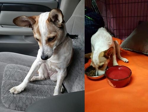 Dogilike.com :: ซึ้ง! ปฏิกิริยาเมื่อเจ้าตูบถูกทิ้งข้างถนน เจอคนใจดีจอดรถยนต์ช่วยชีวิต