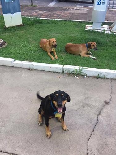 Dogilike.com :: เรื่องราวน่ารักเมื่อ 3 สุนัขจรจัดกลายเป็นเด็กปั๊มสี่ขาในบราซิล !