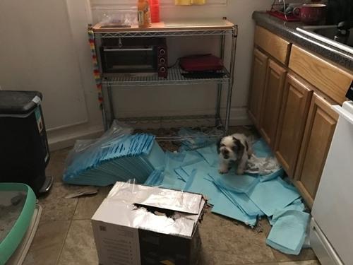 Dogilike.com :: แสบระดับสิบ! ความเซอร์ไพรส์ที่น้องหมาจัดให้เวลาเจ้าของไม่อยู่บ้าน
