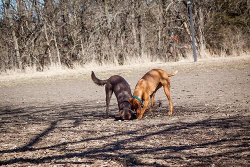 Dogilike.com :: จัดอันดับ ความพังพินาศที่เจ้าของต้องเสียเงินให้น้องหมามากที่สุด !