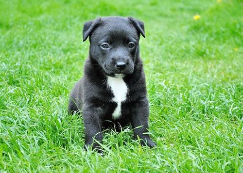 Dogilike.com :: จัดอันดับ ชื่อน้องหมาสีดำที่คนชอบตั้งมากที่สุด !!