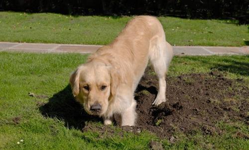 Dogilike.com :: 4 อาการที่บอกว่า น้องหมากำลังเครียดจากอากาศร้อน !